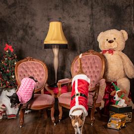 by Myra Brizendine Wilson - Animals - Dogs Portraits ( pets, canine, dog )