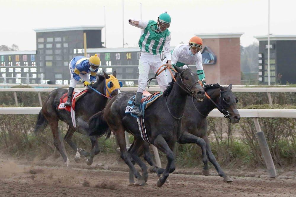 Win Here (Breathless Storm) se queda con el Clásico Gran Premio Hipodromo Chile (G1-2200m-Arena-HCH).