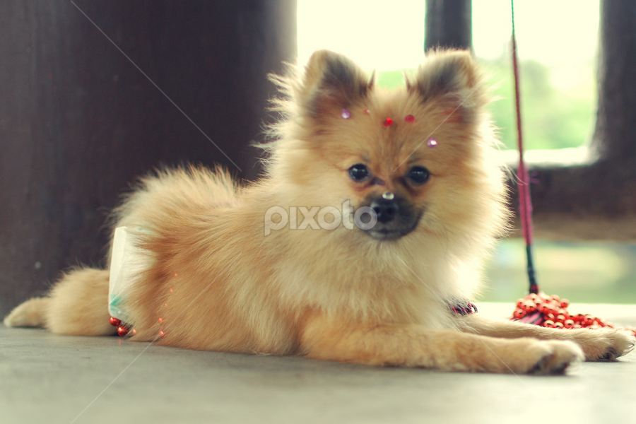 by Emil Zion Punzalan - Animals - Dogs Puppies