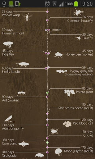 Scale of Lifespans