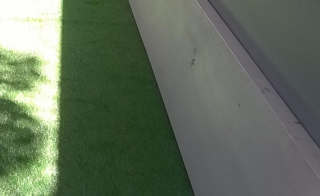bất ngờ với tác dụng của cỏ sân vườn tại trường mẫu giáo