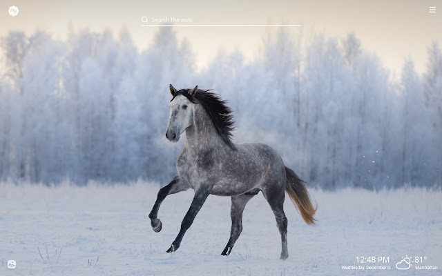 My Winter Animals HD Wallpapers New Tab Theme