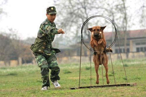 Lý do nên đưa thú cưng đến trường huấn luyện chó Toàn Phát