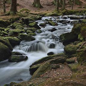 Horská voda by Miloš Stanko - Nature Up Close Water ( hamerský potok, les, šumava, voda )