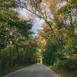 Road to Anyplace  by Debra Summers - Nature Up Close Trees & Bushes ( sky, roads, trees )