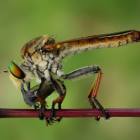 punctured horn by Angga Putra - Animals Insects & Spiders