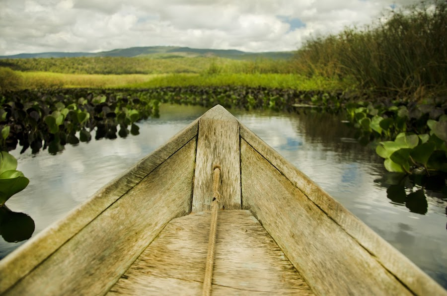 Marimbus, Chapada Diamantina, Bahia, Brazil by Diego Alves - Landscapes Waterscapes ( brazil, chapadadiamantina, bahia )