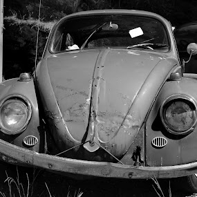 Abandoned Bug by Dave Skorupski - Transportation Automobiles (  )