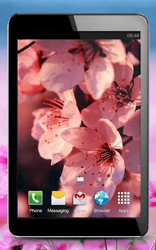 玩免費個人化APP|下載Pink Flowers Live Wallpaper app不用錢|硬是要APP