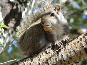 Photo: 05/06/2013 - Gilette, Wyoming - The squirrels still amuse me...