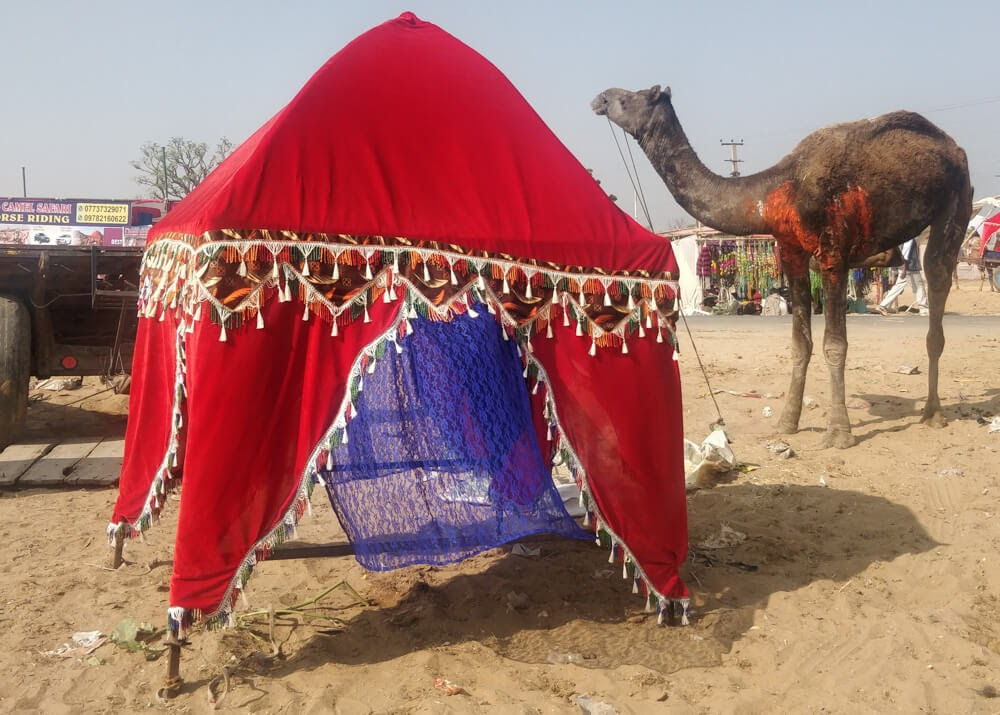 camel+cart+red+pushkar+fair+india