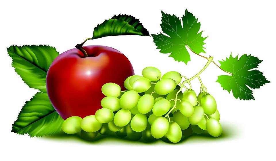 https://cdn.pixabay.com/photo/2013/03/29/11/24/fruit-97479_960_720.jpg