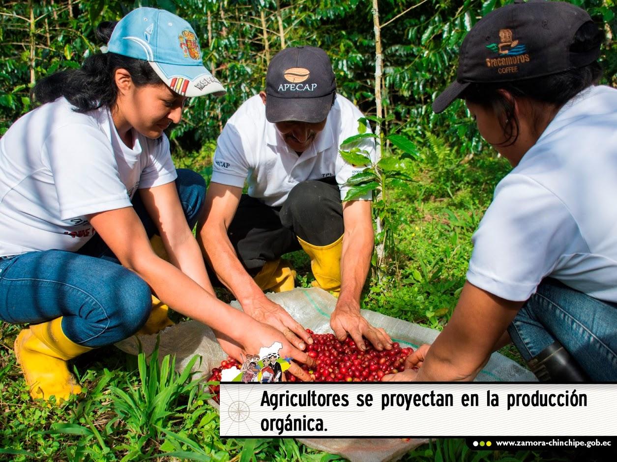 AGRICULTORES SE PROYECTAN EN LA PRODUCCIÓN ORGÁNICA