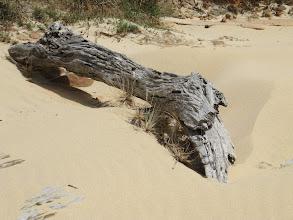 Photo: Year 2 Day 169 -  Log on the Beach