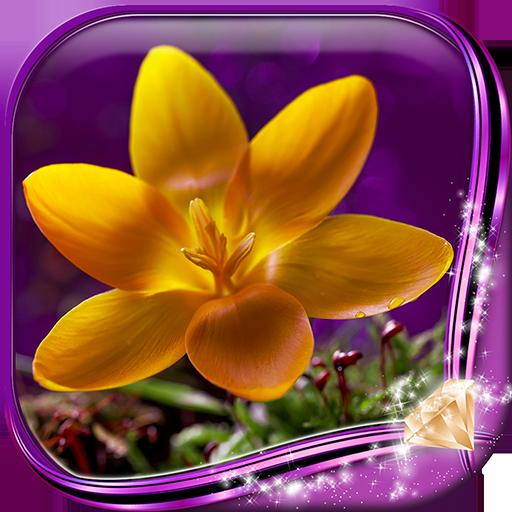 鲜花图片欣赏 個人化 App LOGO-APP試玩