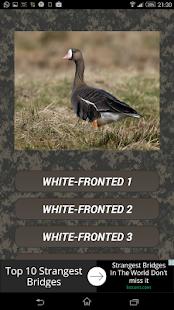 Goose calls - náhled