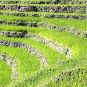 by Ganesh Shahi - Landscapes Prairies, Meadows & Fields