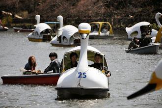 Photo: Hattyúhajó, Inokashira park