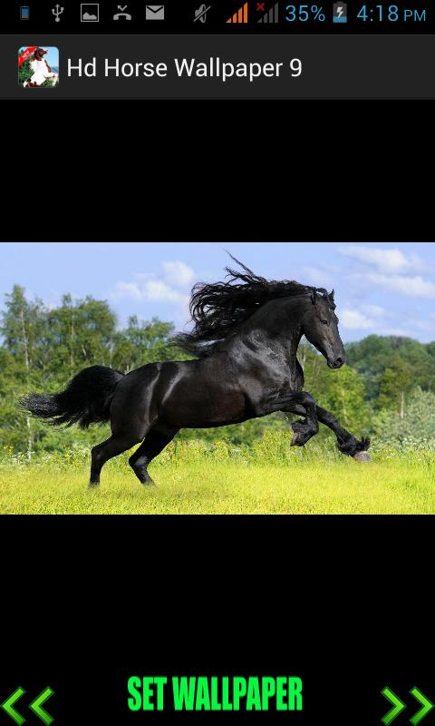 Скриншот Hd Horse Wallpaper