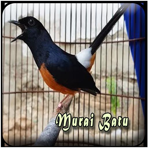 Kicau Murai Batu Offline 1 0 0 Apk Download Com Kicauan Masteran Burung Murai Batu Gacor Offline Apk Free