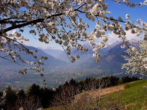 Photo: Blick auf Dorf Tirol, in der Ferne der Ortler (3905 m)