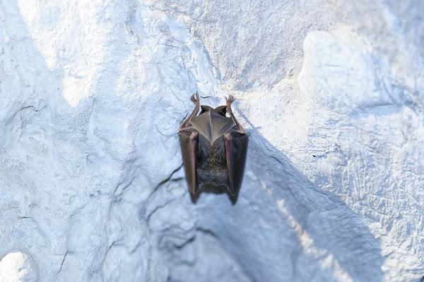 Batcaverna di manolina