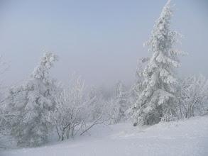 Photo: heissen die windgeneigten Schneebäume am Arber