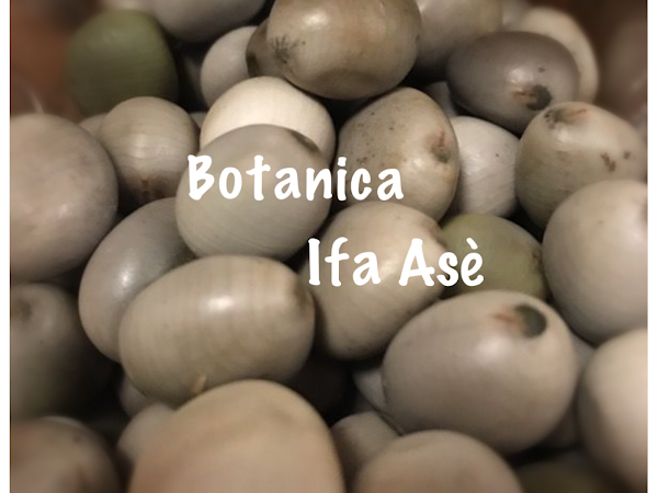 Botanica Ifa Ase