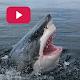 Sharks: Documentaries Online