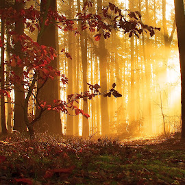 by Alena Ajaja Koutná - Nature Up Close Trees & Bushes