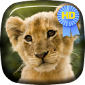 Kitten Lion Cub Live Wallpaper icon