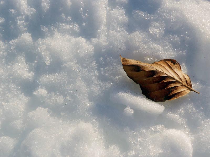 Caldo inverno di norma_martino