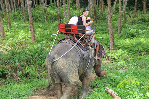 Trek through the jungle on the back of an elephant