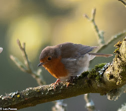 Photo: Robin