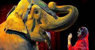 Dumbo junto a su cuidadora en el espectáculo de ayer.
