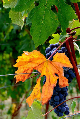 Sfumature d'autunno di alegio89