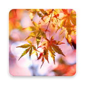 Beautiful Autumn Live Wallpaper