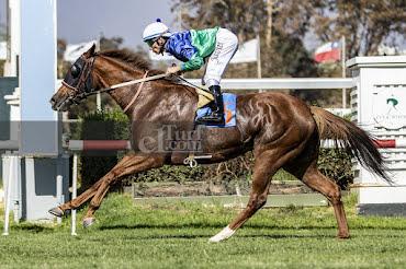 Ciara (Caesarion) conquista Handicap (1000m-Pasto-CHS).