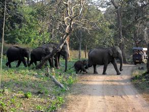 Photo: Elephant Crossing
