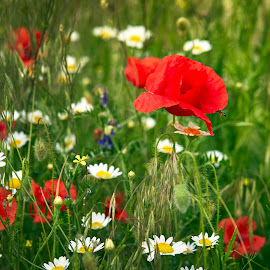 by Silviu Zlot - Flowers Flowers in the Wild