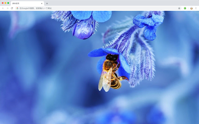 Bees Popular Animals HD New Tabs Theme