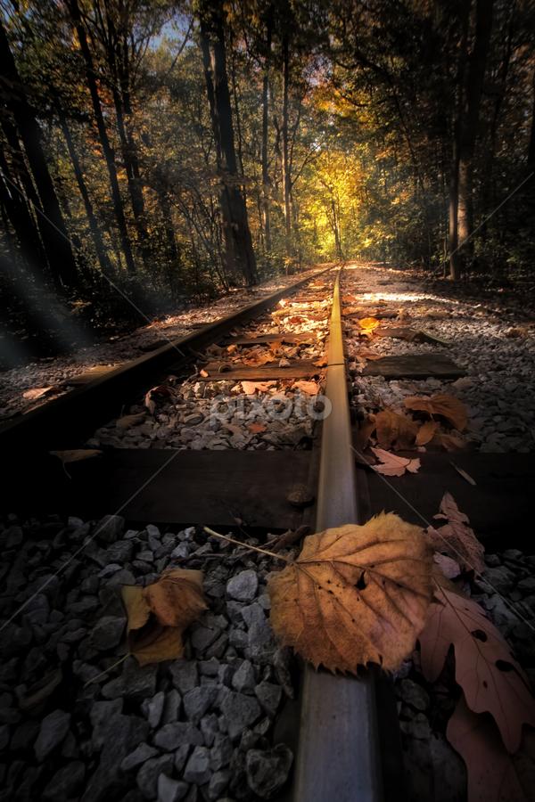 Fallow the leaves  by Sushmita Sadhukhan - Travel Locations Railway ( jungle, autumn, sunrays, leaf, railway track, sunbeam )