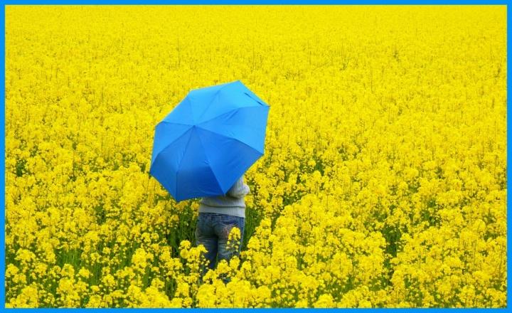 Immersa nel giallo . . di Hanami