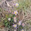 Flower spotting