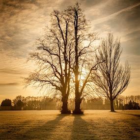 December Frost Sunrise by Phil Clarkstone - Landscapes Sunsets & Sunrises ( chestnut, eltham, winter, d700, london, frost, sunrise, nikon )