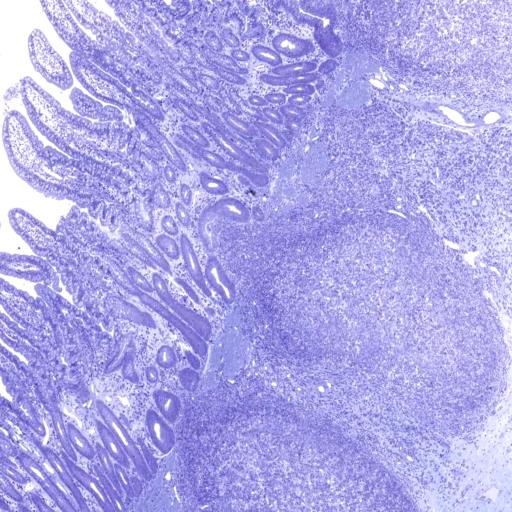 AnatLab Histology