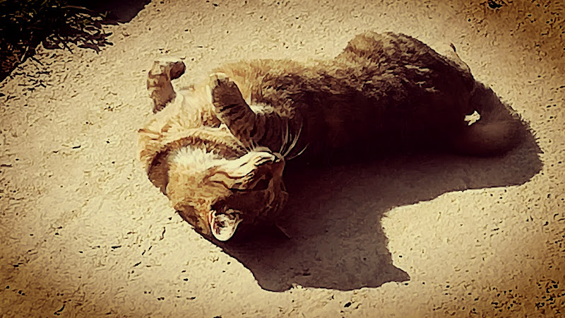 La gatta morta di Robyvf