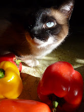 Photo: She's stealing my sunshine!  I found a little spot of sunshine on my kitchen table. So, I added some sweet peppers and grabbed my camera for a little play time. But someone decided to steal my sun beam! ------------------------------------------------------------------ +CATURDAY! .... a little sunshine for my friends +Christophe Friedli +Khrystiane Friedli +Lee Daniels and +Jules Hunter... and everyone else too! :)