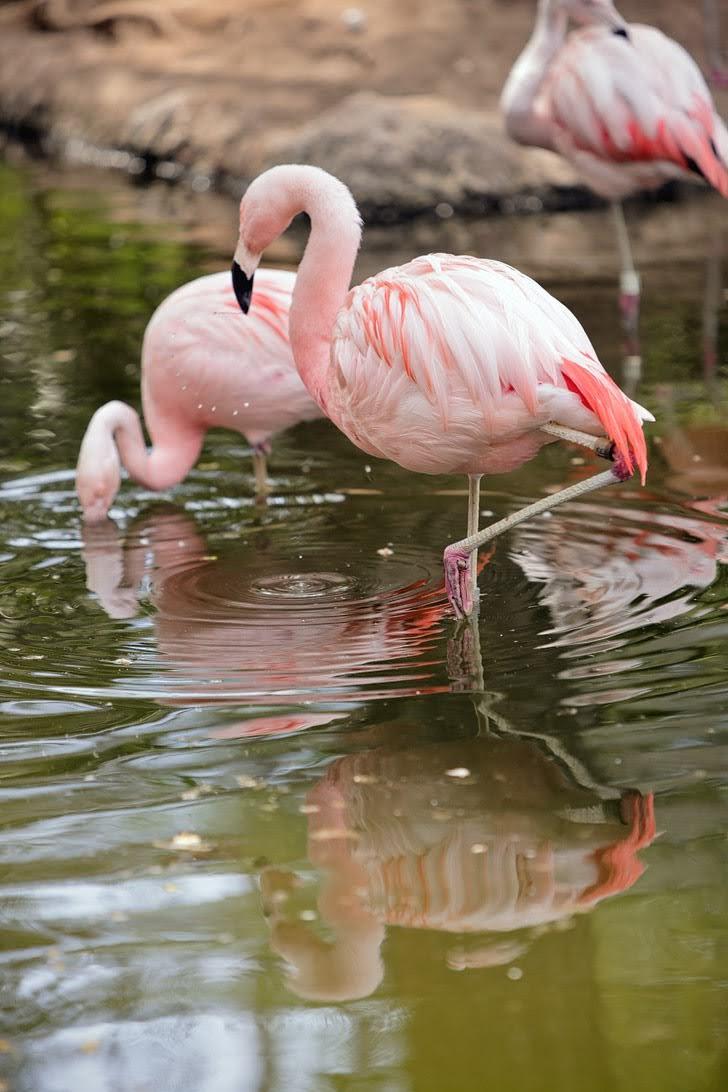 Wild Animal Park San Diego CA.
