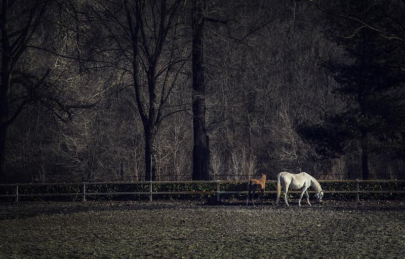 On a walk... di Alona Shestiuk